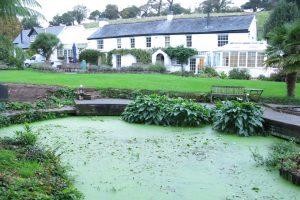 Original Pond