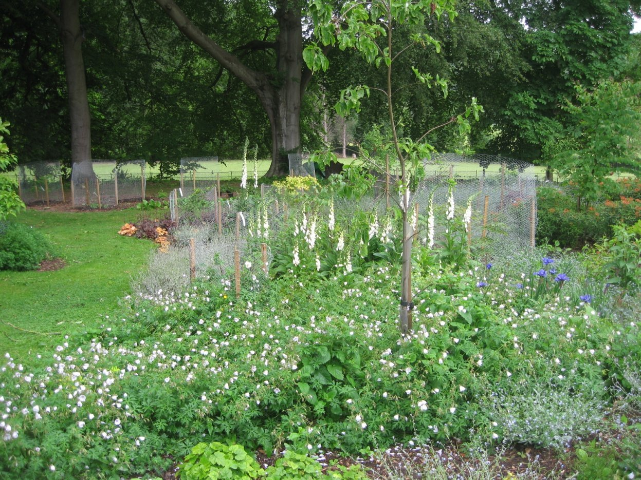 Protecting New Planting From Deer And Rabbits